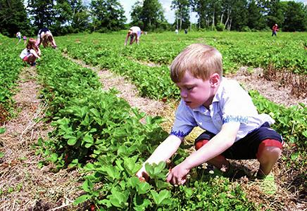 Berry Farms & Events