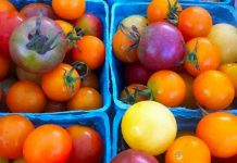 Cherry tomatoes from a local producer (photo: Jillian Bishop)