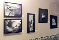 Photographs by Margaret Hamilton at Captain George's Restaurant (photo: Jeannine Taylor)