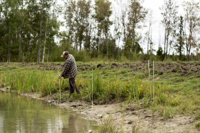 Bob Irvine of Rocky Lane Farm in Lakefield is seen working on a pollinator planting project last fall with that was undertaken in partnership with the Kawartha Farm Stewardship Collaborative. The project saw pollinator plants added to surround a pond installation. (photo: Matt Higgs)