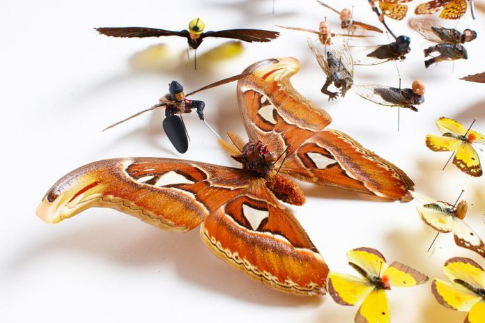 """In """"Pest"""", artist Amy Swartz combines her insect specimens and incorporates various heads and limbs from toys and figurines. The resulting hybrids are at turns curious, whimsical, beautiful, and disturbing to behold. (Photo courtesy of Artspace.)"""