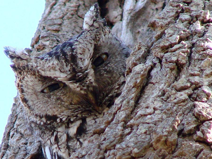 Owls and more owls | Lifestyle & Family | kawarthaNOW.com®