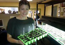 GreenUp's Karen Elcombe holds seedlings that were planted just days ago. Now's the time to test seeds for germination to ensure you're ready to hit the ground running when it's time to plant in the spring. (Photo courtesy of Peterborough GreenUP)