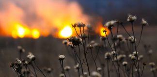 Grrass fire