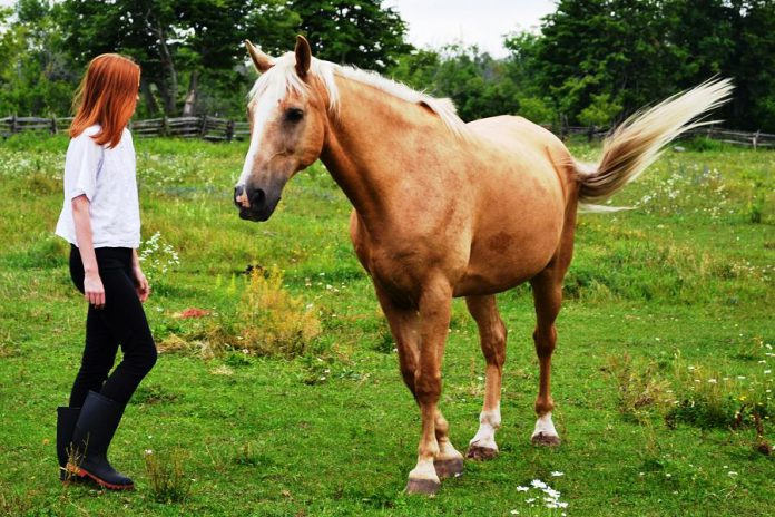 """Horses like Sunny from The Mane Intent will help """"awaken your possibilities"""" at a women's restreat at Norwood's Thirteen Moons this spring (photo: Jennifer Garland)"""