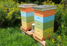 GreenUP's two bee hives at Ecology Park in Peterborough, which members of the public can visit, have become an important part of the organization's programming about the importance of pollinators (photo courtesy of GreenUP)
