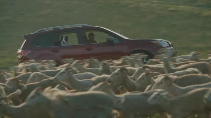 A commercial for the 2016 Subaru Forester was filmed this summer at two farms in the Kawarthas area