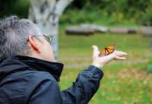 A monarch butterfly being released at GreenUP Ecology Park. You can tell this is a male butterfly as it has a black spot on each hind wing; females lack these spots. (Photo: Samantha Stephens)