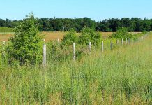 A pollinator hedgerow established on YU Ranch in Norfolk County through the Alternative Land Use Services (ALUS) program