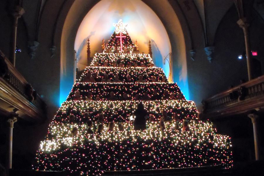 Living Christmas Tree.Experience The Wonder And Joy Of A Living Christmas Tree