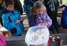 Children string popcorn, grapes, and cranberries onto strings to make bird-friendly garlands at GreenUP Ecology Park at an event on Sunday, December 6