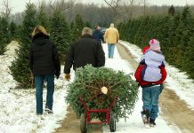 The first Saturday in December is Christmas Tree Day and, for many families, heading out to a tree farm to harvest a Christmas tree is a holiday tradition