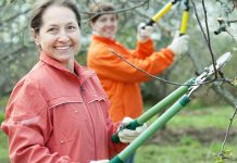 In winter, when fruit trees lay dormant without leaves, you can easily see the shape of the branches and make improvements to increase the tree's health and the fruit you will harvest.