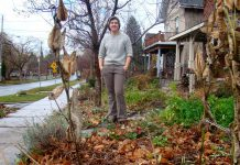 Tegan Moss has completely eliminated municipal water use by being a Water Wise gardener in the front yard of her Sherbrooke Street home. Moss plants native, drought tolerant species such as milkweed, has reduced the amount of her lawn space while increasing the amount of garden space, uses mulch to retain water, and waters only with rain collected in a rain barrel. (Photo: Heather Ray)