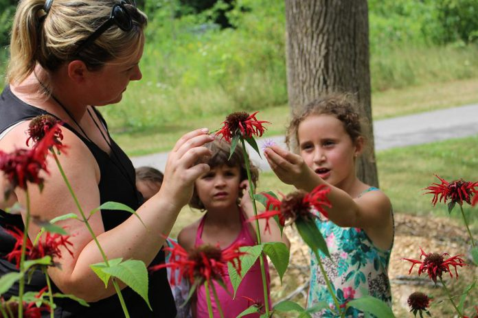 GreenUP Educator Danica Jarvis explains the benefits of using backyard plants to make flavoured water including Bee Balm, shown here growing in the GreenUP Ecology Park Food Forest, which is also a great pollinator plant.