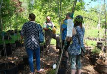 GreenUP Ecology Park Garden Market Coordinator and resident tree expert, Vern Bastable, assists customers with choosing the right tree for their planting site. Staff will be on hand at The Little Autumn Tree Sale on October 16th with sale trees, shrubs, and plants starting at only $1. (Photo: Karen Halley)