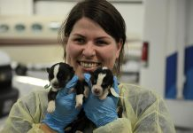 Jenn Tucker, Hospital Manager at Sherbrooke Heights Animal Hospital, estimates that these puppies are between two and three weeks old. Their eyes aren't yet open. (Photo: Eva Fisher)