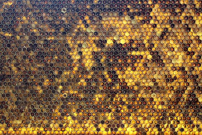 Pesticide use is the suspected cause of the collapse of the bee colony at GreenUP's Ecology Park. This frame from one of the GreenUP Community Bee Keeping Program hives shows the diversity of pollen sources that honeybees are finding here in Peterborough. The variation of colour seen in each of the cells is caused by different types of pollen being collected and brought back to the hive. (Photo: Karen Halley, GreenUP)