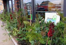 Cuttings from Sumac, Spruce, Cedar, Birch, and Dogwood, and more, make beautiful natural holiday decorations, as seen outside the GreenUP Store on Aylmer Street. Holiday decorations made with natural items are simple to create and will biodegrade at the end of the season. (Photo: Karen Halley)