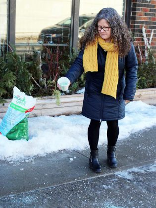 GreenUP Store Coordinator Ausma Clappison spreads an environmentally friendly de-icer in front of the GreenUp Store on Aylmer Street. Alternatives to salt are gentle to vegetation and wildlife, non-corrosive, and safe to handle. (Photo: Karen Halley)