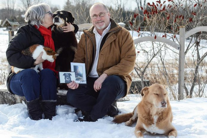 Signe and Stu Harrison are honorary chairs of the Fur Ball Gala, the annual fundraiser for the Peterborough Humane Society on February 25. The Harrisons currently have three rescue pets, a calico cat named Cali and two dogs Sadie and Luke. Stu is holding a photo of their rescue dog Gus and their cat Boots, who both passed away last year. (Photo: Niki Allday)