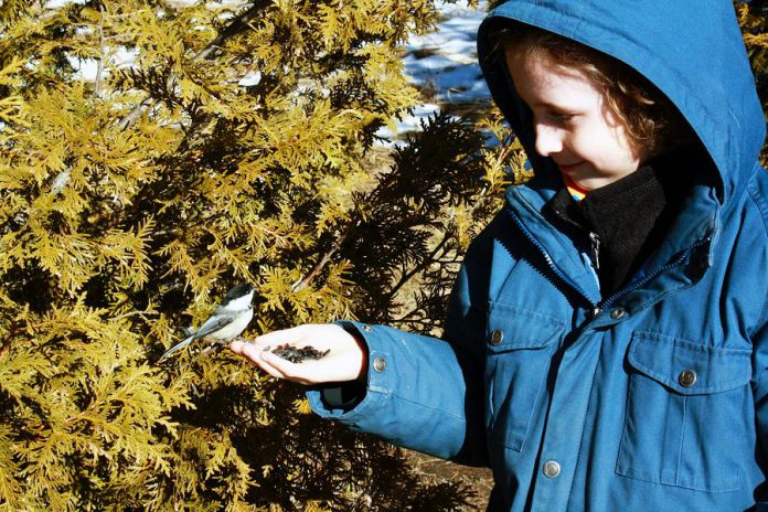 Bird watching is a great family activity. It provides children with the opportunity to develop an interest in local wildlife. With some patience and by being very still, you can even train Chickadees to feed right from your hand – an experience that is sure to bring joy to all. (Photo courtesy of GreenUP)