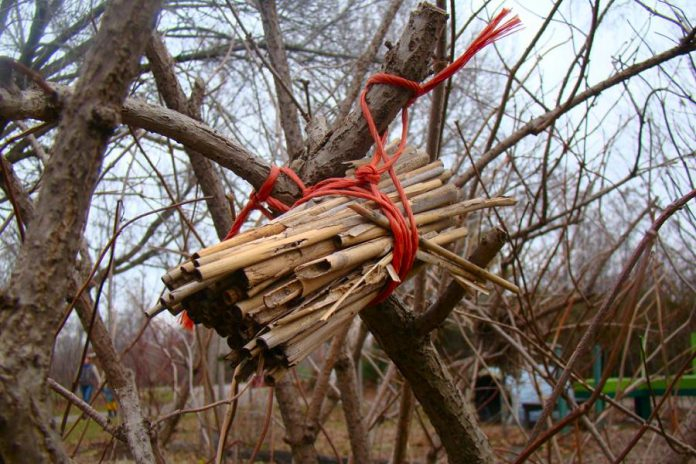 Homemade bee homes for wild cavity nesting bees can be made from natural, hollow, straw-like materials bundled together and placed in a nook of a tree or shrub. This bee house is made from the stems of grasses tied snugly together and hung at GreenUP Ecology Park in a place where wild bee activity can be easily observed.