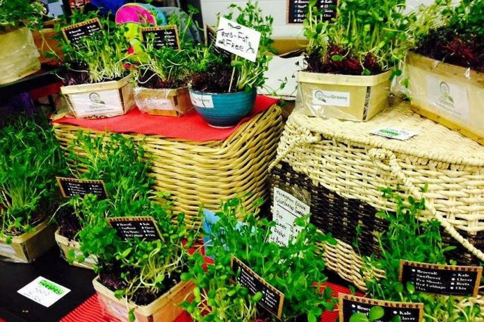 Tiny Greens has been selling microgreens for two years (supplied photo)