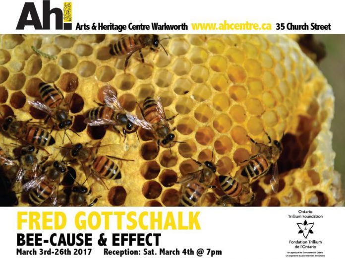 """Fred Gottschalk's exhibition """"Bee-Cause and Effect"""" runs until March 26 (graphic courtesy of Arts and Heritage Centre)"""
