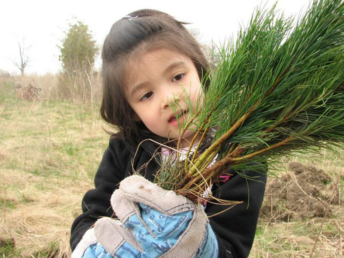 Otonabee Conservation's Tree Seedling Program allows watershed landowners to order trees and shrubs from a selection of species, that you can plant to reforest land or add to the biodiversity of your forest property (photo: Otonabee Conservation)