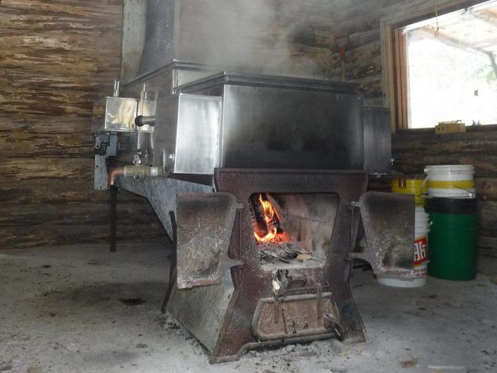 Learn all about the tradition of maple syrup production at Ganaraska Forest Centre on April 1 (photo courtesy of GRCA)