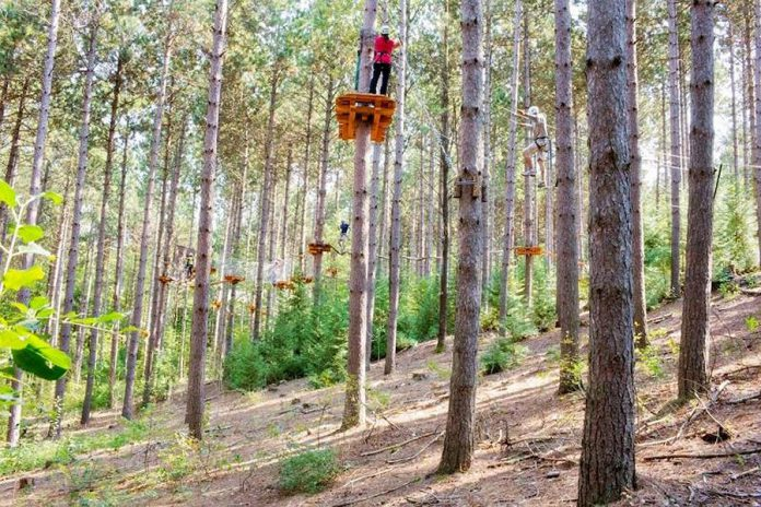 Treetop Trekking Ganaraska opens for the season on April 1 and has a special try-it session available for Maple Syrup Day attendees (photo: Treetop Trekking Ganaraska)