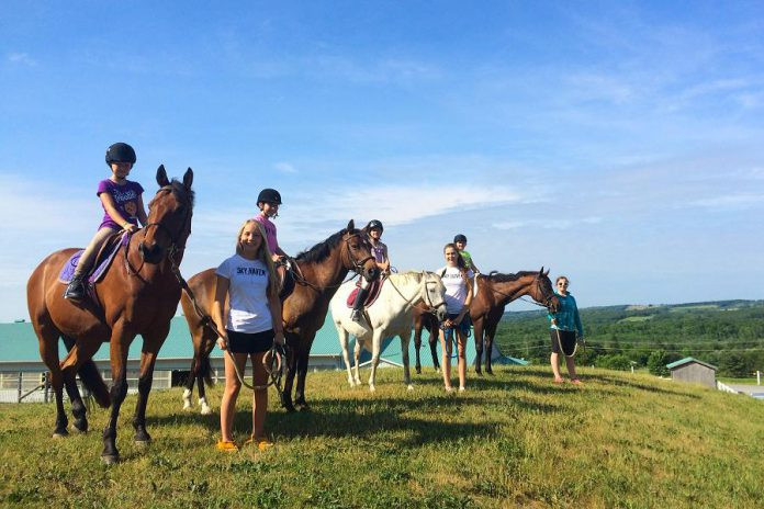 Sky Haven Equestrian Centre in Bethany offer lessons on and off the horse. (Photo: Sky Haven Equestrian Centre)