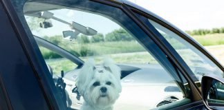The Peterborough Humane Society's No Hot Pets campaign raises awareness about the dangers of leaving pets unattended in vehicles during the summer months.