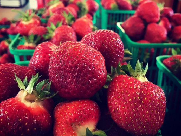 The first strawberries of the 2017 season from McLean Berry Farm. Pre-picked berries are available now, and you can pick your own soon. (Photo: McLean Berry Farm)