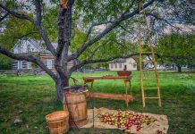 Celebrate apples and the harvest season at Applefest at Lang Pioneer Village in Keene on Sunday, September 10, one of the stops on Otonabee-South Monaghan Township's Farms, Fields and Food Tour. (Photo: Lang Pioneer Village)