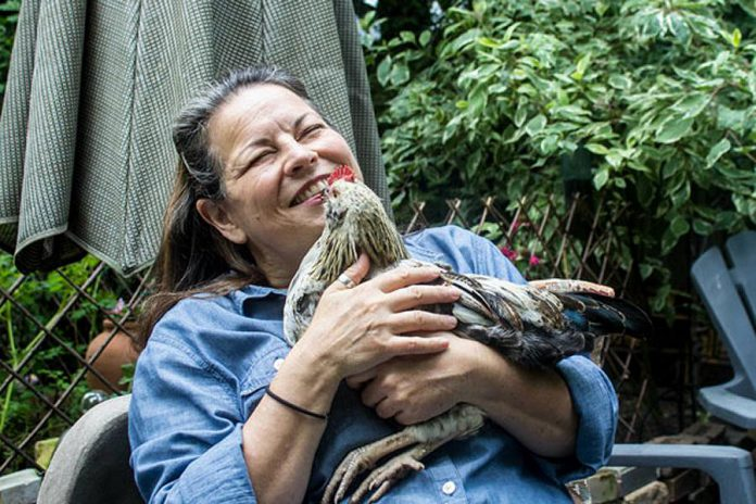 """On Sunday afternoon, Port Hope chef-turned-writer Signe Langford will present the seminar """"Farm Fresh Eggs and Backyard Hens""""."""