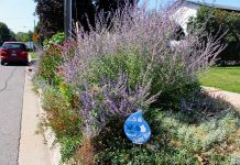 This boulevard garden has been recognized in the GreenUP Water Wise Landscaping Recognition Program. Planting a boulevard garden is a beautiful way to transform a space that can otherwise be an uninspiring piece of your property. Planting gardens instead of grass can mean less watering, more rain absorption, less flooding, more pollinators, and enhanced beauty in your front yard. (Photo courtesy of GreenUP)