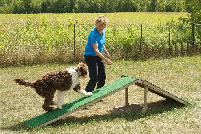 "At her large rural property in Bethany, Karen Laws offers training workshops as well as a unique ""boarding school"" for dogs, where Karen guarantees she will train your dog in as little as two weeks."
