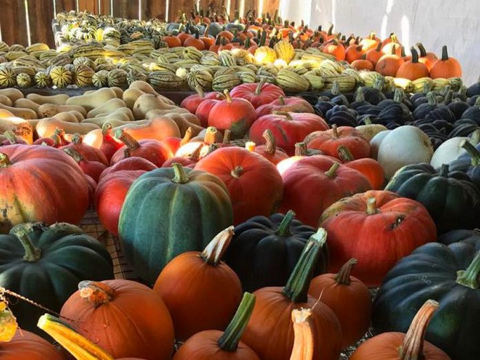 "Chick-a-biddy Acres harvested ""easily a tonne"" of squash this fall, according to owner Sherry Patterson. (Photo: Chick-a-biddy Acres)"