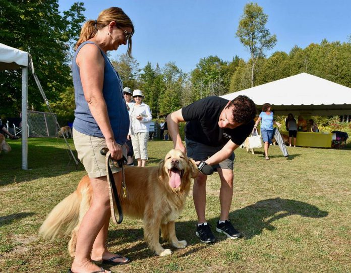 "While at the Golden Rescue Picnic, Rick Mercer chatted with owners of Goldens, including this one whose name is ""Mercer"".  (Photo: Rick Mercer Report / Facebook)"