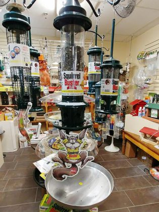 The Squirrel Buster Plus (pictured here) is The Avant-Garden Shop's top-selling squirrel-proof bird feeder. The store began as a retailer of high-end outdoor garden decor and quickly grew to include backyard bird supplies for outdoor enthusiasts. (Photo: Paula Kehoe)