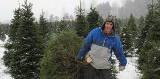 There are several tree farms in the Kawarthas area where you can harvest your own Christmas tree or get a fresh pre-cut one. Grafton Christmas Trees, east of Cobourg, offers cut-your-own Balsam Fir and White Spruce. (Photo: Grafton Christmas Trees)
