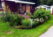 The Sustainable Urban Neighbourhoods (SUN) program connects GreenUP staff with residents in two Peterborough neighbourhoods to install greening projects, such as this pollinator garden, that has been planted in the East City Curtis Creek neighbourhood. SUN program greening projects improve neighbourhood aesthetics, increase greenspace and canopy shade, and enhance resident well being. (Photo: GreenUP)