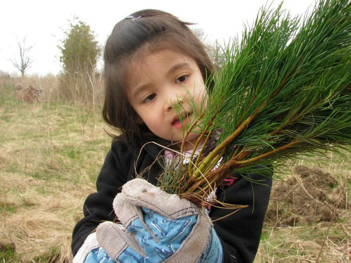 The deadline for ordering tree and shrub seedlings from Otonabee Conservation is Friday, March 23, 2018. Seedlings will be available for pick-up in late April. (Photo courtesy of Otonabee Conservation)