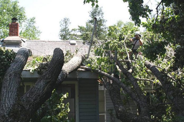 Logan Tree Experts removing trees that have fallen on a cottage in Coboconk.  (Photo: Logan Tree Experts)