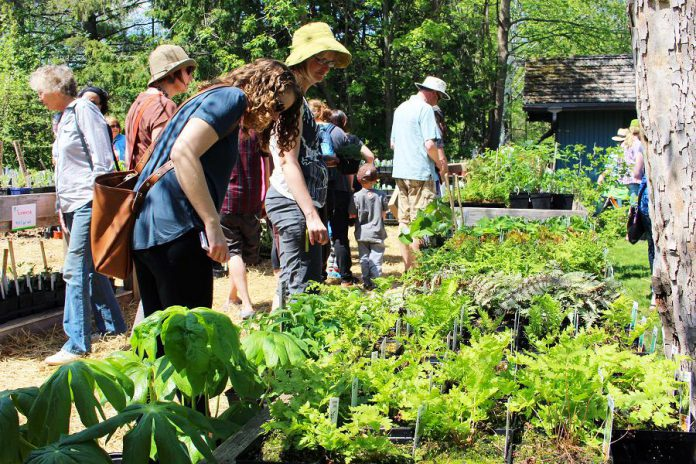 Gardeners at the annual GreenUP Ecology Park Plant Sale on May 20, 2018 can choose from over 150 species of edible and native plants, shrubs, and trees that thrive in our region of Ontario. Selecting locally adapted native species to plant ensures that you are also providing habitat for wildlife and food sources for pollinators. (Photo: GreenUP)