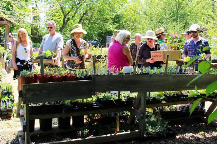 The 2018 GreenUP Ecology Park Annual Spring Plant Sale takes place from noon to 4 p.m. on Sunday, May 20th at 1899 Ashburnham Drive in Peterborough. (Photo: GreenUP)