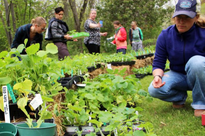May is a month of rejuvenation, growth, and great green events! GreenUP offers many resources, products, events, and workshops in May, including the official start of the gardening season, The Annual GreenUP Ecology Park Plant Sale on May 20th from noon to 4 p.m. (Photo courtesy of GreenUP)