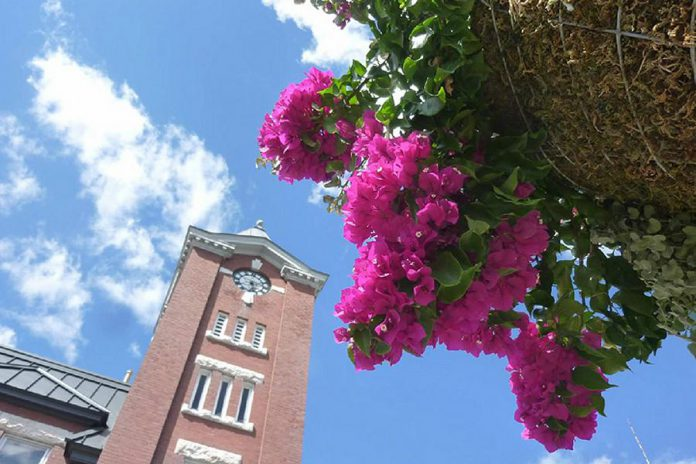 The annual plant sale is the Lakefield Horticultural Society's only fundraiser to help the society purchase and maintain 20 hanging baskets on Lakefield downtown streets. (Photo: Lakefield Horticultural Society)